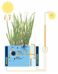 plant-e_technologie_1